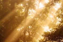 Sunlight through trees Royalty Free Stock Photo