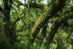 Sunlight on Trees stock image