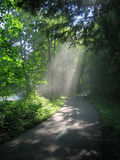 Sunlight through the Trees. A beam of sunlight is illuminated by dust kicked up by a passing car in the Cleveland Metroparks Stock Photos