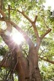 Sunlight through the Trees Stock Image