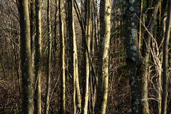 Sunlight Trees Royalty Free Stock Images