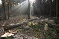 Sunlight through the trees Stock Photography