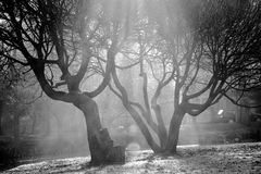 Sunlight through trees. On monochrome picture Stock Image