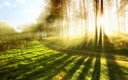 Sunlight through trees Stock Photo