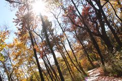 Sunlight through the trees and an autumn path in the forest. Beautiful path in the fall with autumn colors and trees, with the sunlight pouring in through them Royalty Free Stock Images
