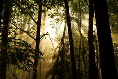 Sunlight through the trees. Captured in the morning glow of the Sun through the trees royalty free stock photography