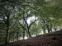 Sunlight through trees. Early autumn. Royalty Free Stock Image