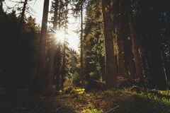 Sunlight Through Trees in a Forest Stock Photos