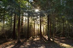 Sunlight through trees at Heaven`s gate, Wiltshire, Uk Royalty Free Stock Images