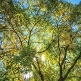 Sunlight through trees Royalty Free Stock Image