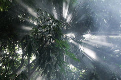 Sunlight trees stock photos