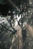 Sunlight trees stock image