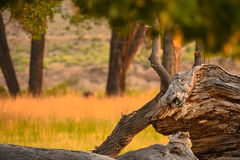 Sunlight On Treetrunk In Summer Royalty Free Stock Photography