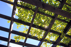 Sunlight through trellis frame and vine Stock Images