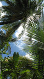Sunlight in tropical forest Stock Image