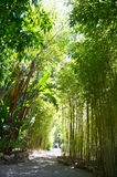 Sunlight in tropical garden. bamboo trees Royalty Free Stock Photo