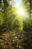 Sunlight in tropical jungle Royalty Free Stock Photography