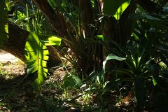 SUNLIGHT ON TROPICAL VEGETATION Royalty Free Stock Photo
