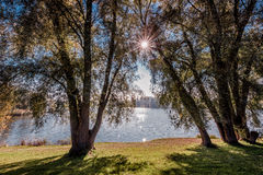 Sunlight trough trees Royalty Free Stock Images