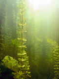 Sunlight Underwater freshwater flora rivers, lakes, pond. Surfac Stock Images