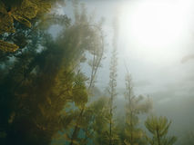 Sunlight Underwater freshwater flora rivers, lakes, pond. Surfac Royalty Free Stock Image