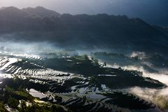 Rice terraces and fog royalty free stock photos