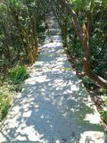 Path in deep forest stock photography