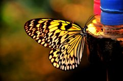 Sunlight through the wings of a butterfly Royalty Free Stock Photography