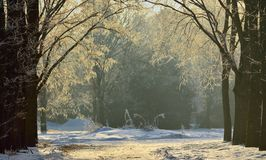 Sunlight in winter Stock Photo