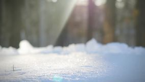 Sunlight winter day a fir tree forest in snow. Blurred wood on the background stock footage