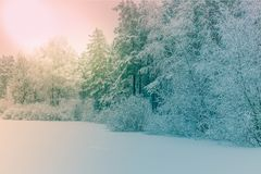 Sunlight in the winter forest. Panoramic view. Panorama winter fairy tale Stock Photography