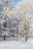 Sunlight Winter park in snow Royalty Free Stock Photography