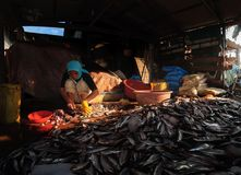 Sunlight on a women chopping a large pile of fish. Serene scene of sunrise lights shone on a women working in small hut `Kerepok` or fish cake factory Royalty Free Stock Photo