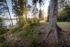 Sunlight in wood, autumn Stock Photography