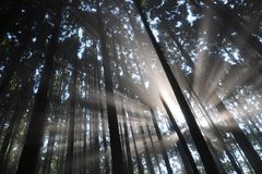 Sunlight in the woods Royalty Free Stock Photography