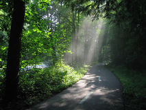 Sunlight through Woods. Sunlight through trees on a bike path in the Cleveland Metroparks, Ohio Stock Photo