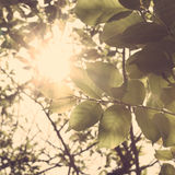 Sunlight in the woods Stock Photography