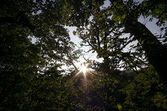 Sunlight through woods Royalty Free Stock Images
