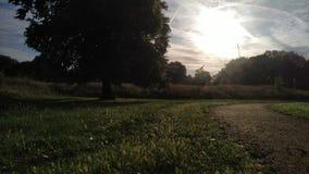 Sunlights chauds en parc de ville banque de vidéos