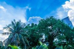Sunlights en parc de Lumpini, Bangkok, Thaïlande images libres de droits