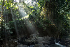 Sunlights in jungle. Lianas and river enlightened by the first sunlights Stock Image