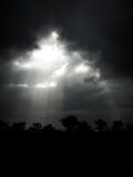 Sunlights met bos Stock Foto