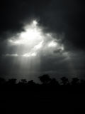 Sunlights mit Wald Stockfoto