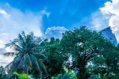 Sunlights no parque de Lumpini, Banguecoque, Tailândia Imagens de Stock Royalty Free