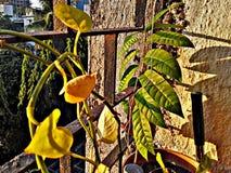 Sunlights på växtsidor i Indien Royaltyfri Foto