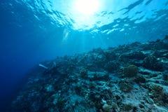 Sunlights von Underwater stockbild