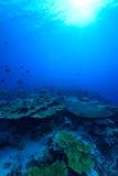 Sunlights von Underwater lizenzfreie stockfotografie