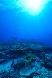 Sunlights von Underwater stockfotografie