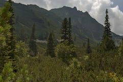 Sunlit верхнее горы перерастанное с coniferous лесом и glade на экологической прогулке к пику Maliovitza в горе Rila Стоковые Фотографии RF