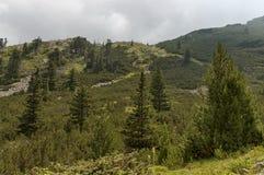 Sunlit верхние горы перерастанные с coniferous лесом, glade и потоком на экологической прогулке к Maliovitza выступают в moun Ril Стоковая Фотография